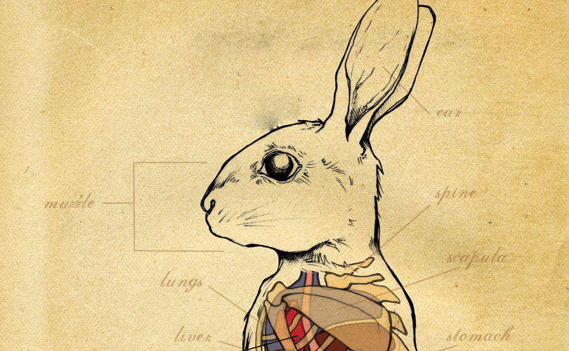 rabbit-x-ray